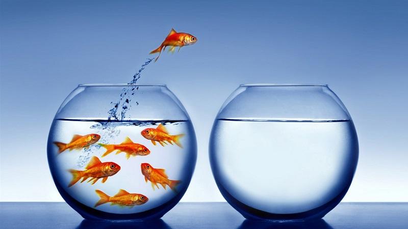 2012, l'année du poisson rouze